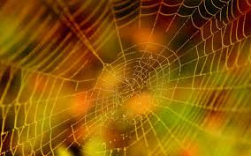 halloween spider background image gallery of halloween spider webs