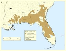 Chipley Florida Map by Help The Gopher Tortoise Foster Folly News Chipley Florida