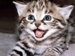 letest and best animals hd wallpapers download lion desktop