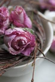 dried roses dried roses khizra nursery