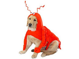 Extra Small Dog Halloween Costumes Amazon Casual Canine Lobster Costume Dogs Extra Small