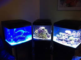 cool fish tanks small