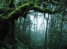 nature jungle tree leaves hd wallpaper
