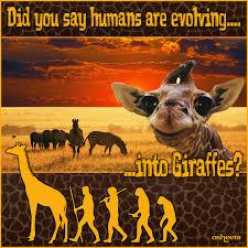 Drunk Giraffe Meme - giraffe challenge or human evolution know your meme