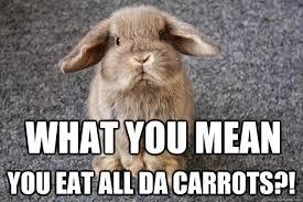 Meme Eat - what you mean you eat all da carrots sad bunny quickmeme