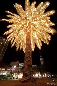 47 best palm trees images on lights