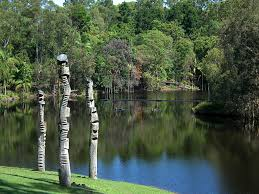 Brisbane Botanic Gardens Mount Coot Tha by File The