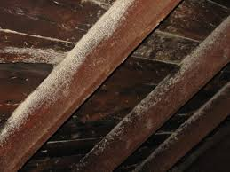White Mold In Basement Dangerous by How To Identify White Mold On Wood The Basic Woodworking