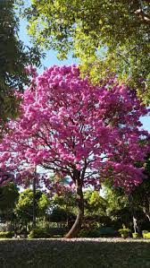 friends of peacehaven botanic park inc new members new plants 258 best peter thompson trees images on pinterest plants