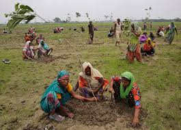 india plants 50 million trees in one day smashing world record