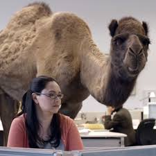 Hump Day Camel Meme - hump day know your meme