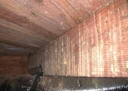 Powder Post Beetles In Hardwood Floors - beetles order coleoptera extension