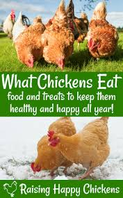 How To Keep Backyard Chickens by Chicken Nutrition What Do Backyard Chickens Eat
