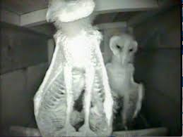Barn Owl Sounds 83 Best Lechuza Images On Pinterest Animal Anatomy Anatomy And