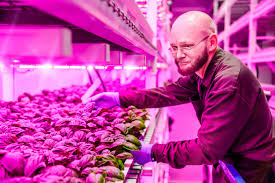 philips led grow light philips green sense farms usher in new era of indoor farming with