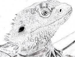 bearded dragon pogona vitticeps by spynder4 on deviantart
