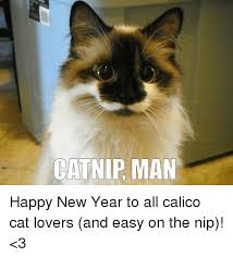 Happy New Year Cat Meme - catnip man happy new year to all calico cat lovers and easy on the