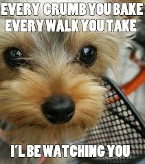 Funny Animal Memes Tumblr - funny animal memes tumblr funny 照片从chicky9 照片图像图像