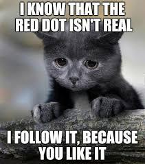 Kat Meme - kitty kat confessions memes lol