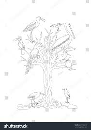 coloring page tree tropical birds kids stock vector 669310336