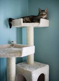 cat furniture dog in a cat tree photo people com