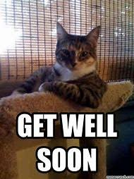 Get Well Soon Meme Funny - best 25 ideas about get well soon cat find what you ll love