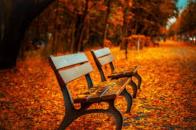 park bench and floor in the fall leaves 52160 autumn theme