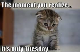 Tuesday Meme - tuesday meme funny memes