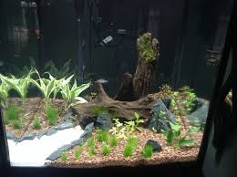 Substrate Aquascape Step By Step Guide For Setting Up A Planted Tank Ratemyfishtank Com