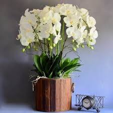 artificial orchids artificial flowers artificial orchid display orchids