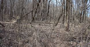 Ghost Hunting Blinds Can You Find The Ghostblind In These Photos Pics