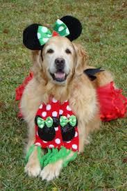 190 best pet costumes images on pinterest pet costumes animals