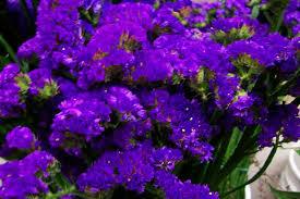 Flowers Columbia Sc - flowers floral arrangements columbia lexington irmo west
