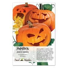 jack o lantern pumpkin seeds cucurbita pepo u2013 seed needs
