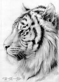 tigers drawing pictures 1000 ideas about tiger tattoo on pinterest