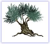 lessons from the olive tree