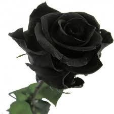 real black roses