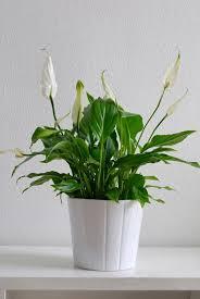 plante pour chambre plantes pour votre chambre à coucher pour vous aider à dormir
