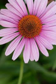 best bouquet flowers to grow sunset
