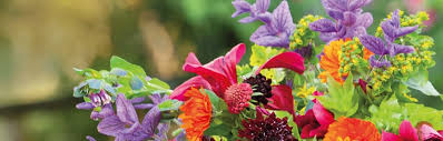 cut flowers fantastic cut flower plants for gardens