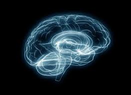 light up your brain this is what happens in your brain when you fancy someone
