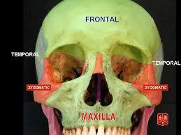 Floor Of The Cranium The Bony Skull U2013 Structure Functions U0026 Diseases