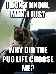 i don t know man i just why did the pug life choose me
