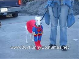 Sonic Halloween Costume Sonic Halloween Costume Video Dailymotion