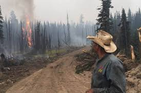 rancher helps find cattle in elephant hill fire williams lake