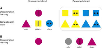 stimulus salience as an explanation for imperfect mimicry