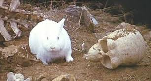 Angry Bunny Meme - 7 scariest rabbits in movie history features way too indie