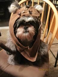 Large Dog Halloween Costume Ideas 20 Dog Cone Ideas Dog Cone Collar Funny
