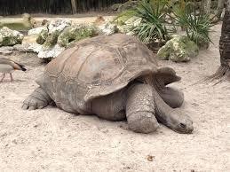 aww sad tortoise animals pinterest tortoise