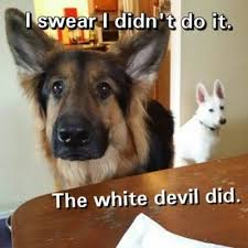 German Shepherd Memes - german shepherd memes page 8 white german shepherd pinterest